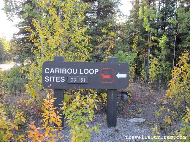 CaribouLoop