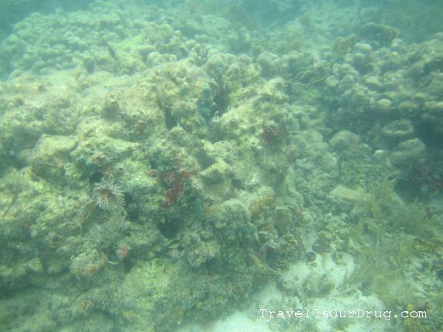 bocassnorkel3