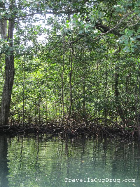 mangroves1